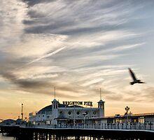 Seagull at Palace Pier by Rick  Senley