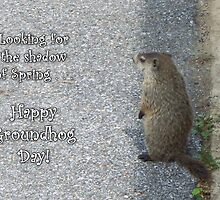 Groundhog Day - Looking for Spring by WalnutHill