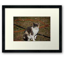 Momma Kitty Framed Print