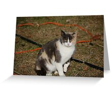 Momma Kitty Greeting Card