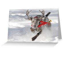 Christmas Reindeer Weimaraner Greeting Card