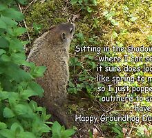 Groundhog Day - Sitting in the shadows by WalnutHill