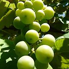green grapes by tego53