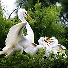 Great White Egret with Babies by Paulette1021