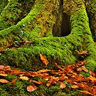 Roots N Leaves by chrisyfitzuk