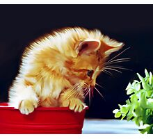 Cat On Red Tin Photographic Print