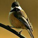WINTER BIRD SERIES by RoseMarie747