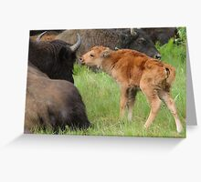 The Bison's Kiss Greeting Card