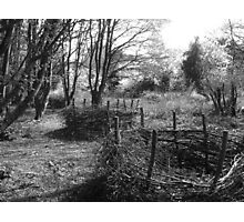 Willow Hurdles Photographic Print