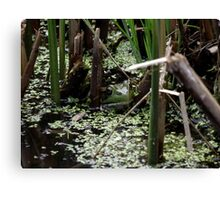 Hello froggy Canvas Print