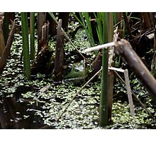 Hello froggy Photographic Print