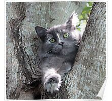 Kitty In Tree Poster