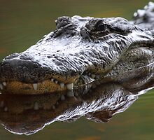 Alligator Grin by naturalnomad