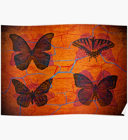 Lepidoptera collection Poster