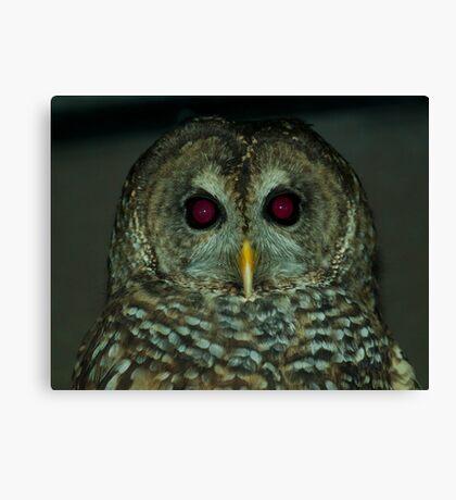 Owl! Canvas Print