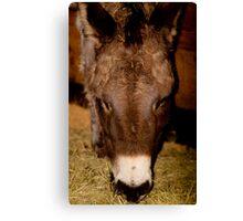 Donkey! Canvas Print