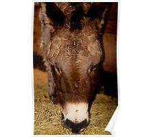 Donkey! Poster