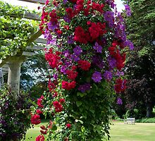 A Colourful Arbour  by hootonles