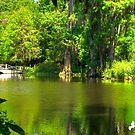 The Lake at Magnolia Plantation by TJ Baccari Photography