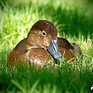 Nestled in the Grass by Photography by TJ Baccari