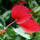 Red hibiscus blossom with wings by ♥⊱ B. Randi Bailey