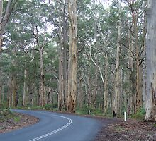 The road less travelled, Margaret River, Western Australia by DashTravels