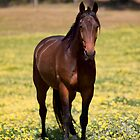 Outstanding in my Field by Michelle  Wrighton