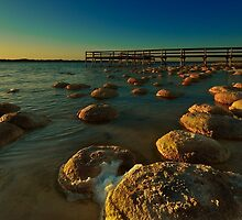 """Lake Clifton Thrombolites"" by Heather Thorning"