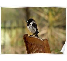Baby Butcher Bird Poster