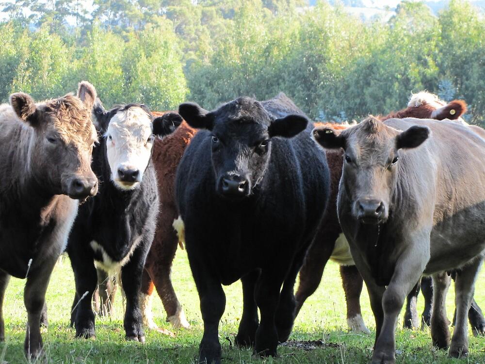 Mad cows by Jen Bullen