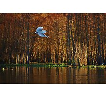 Quiet Flight Photographic Print