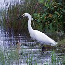 Little Egret by Peter Doré