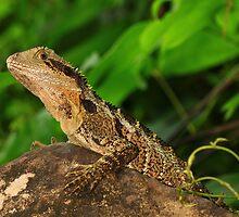 Dragons Rock by SRB1