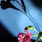 flower and light by Doug McRae