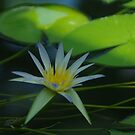 Blue Lotus by yeuxdechat