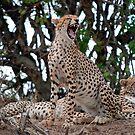 Yawn by Brad Francis