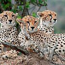 Wildlife by Brad Francis