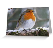 The Lake District: The Windermere Robin Greeting Card