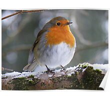 The Lake District: The Windermere Robin Poster