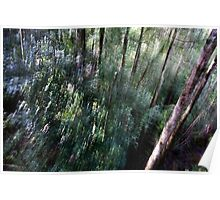Forest #1 - Tahune Forest Reserve, Tasmania Poster