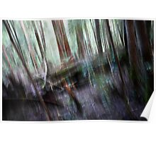 Forest #2 - Tahune Forest Reserve, Tasmania Poster