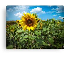 Summertime View Canvas Print