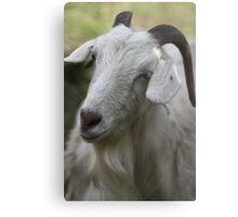 A Goat Portrait Metal Print