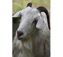 A Goat Portrait Photographic Print