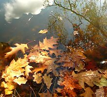 Autumnal Leaves by kernowseb