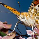 Butterfly feeding on flower by teva-art