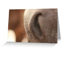 Soft Horse Nose - perfect for kissing Greeting Card