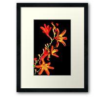 Orange on Black Framed Print