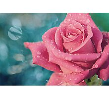 New Year's Rose Photographic Print
