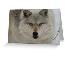 Look Into The Soul Of The Forest  Greeting Card